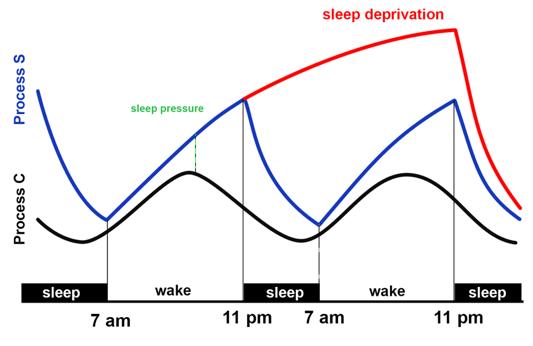 Sleep cycle original