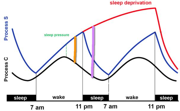 Travel effect on sleep